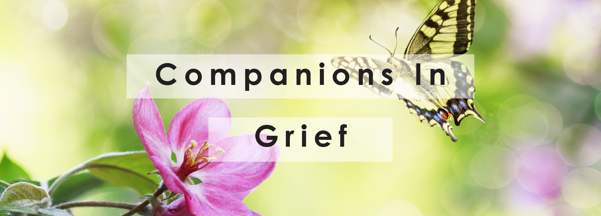 Companions in Grief Support Group